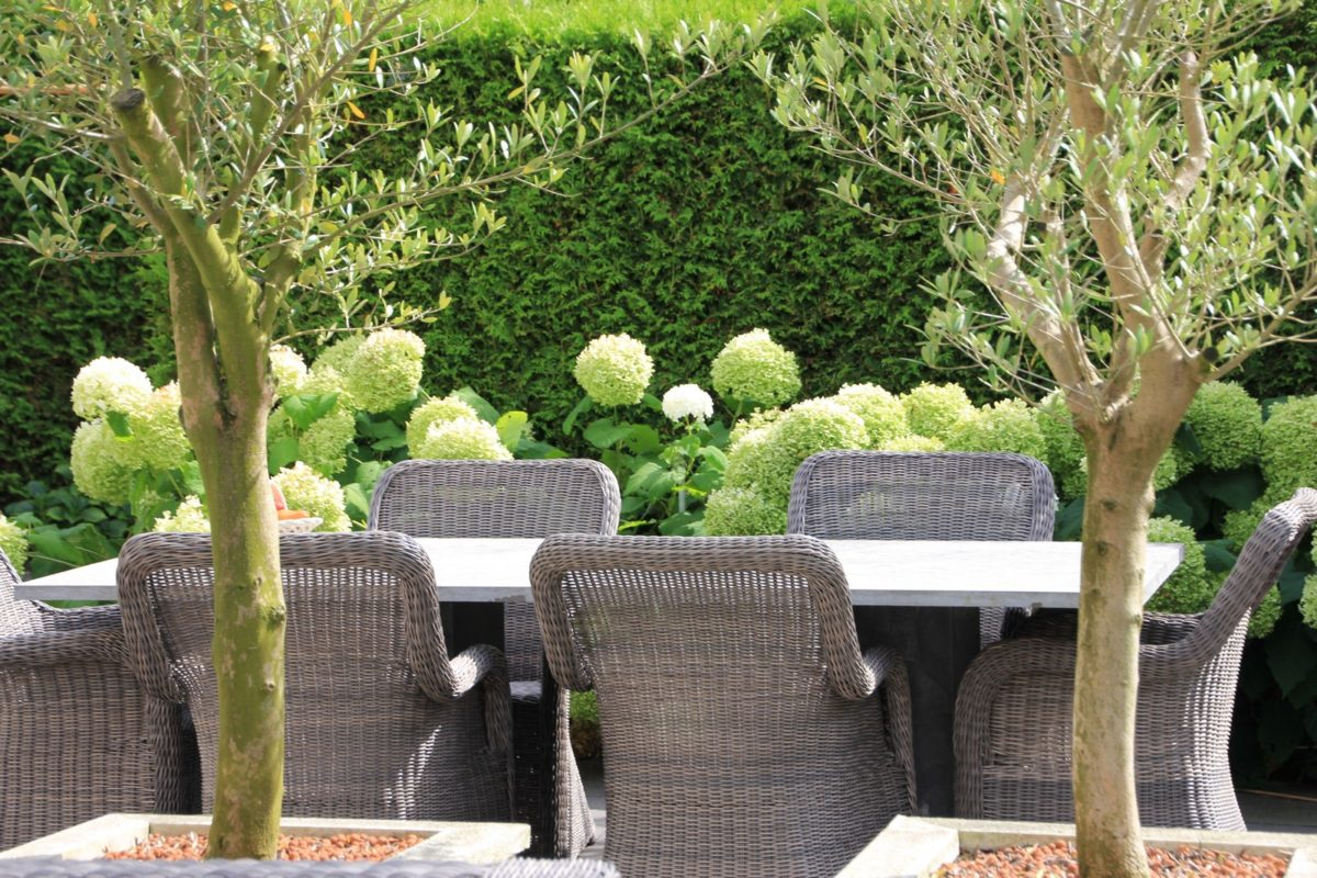 Moderne tuin met olijfbomen