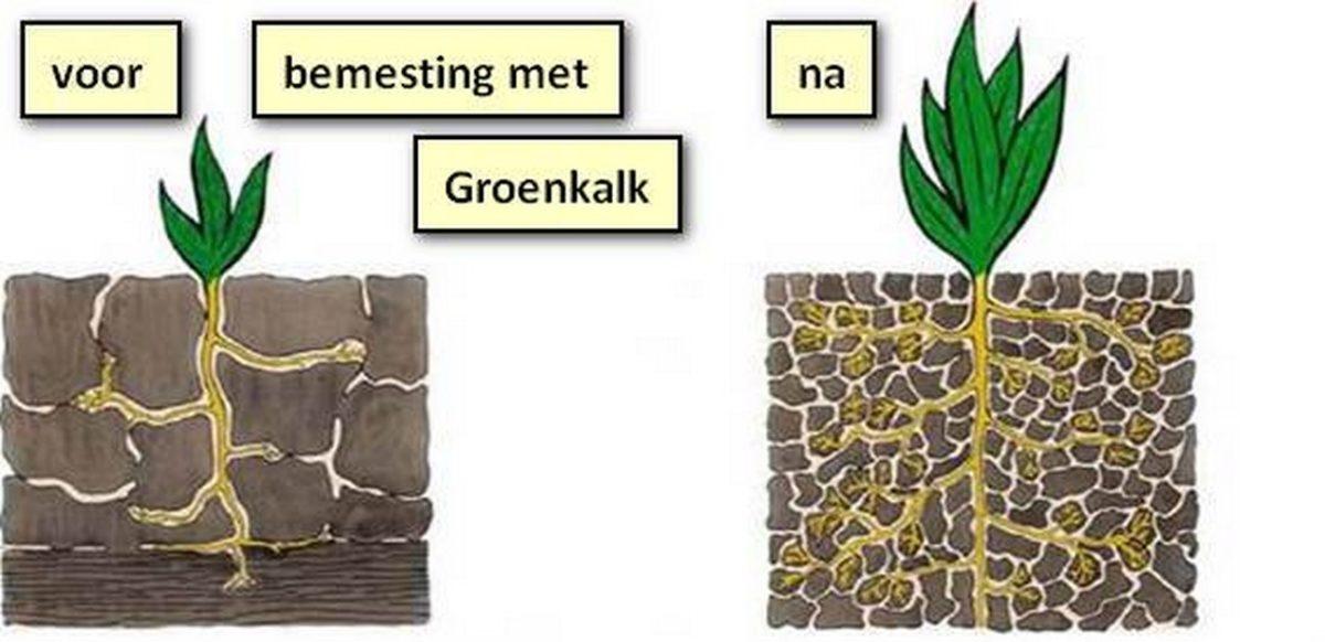 https://www.franscommandeur.nl/wp-content/uploads/2018/05/verschil-in-plant-met-groenkalk-gift-voor-na_tn-1200x582.jpg