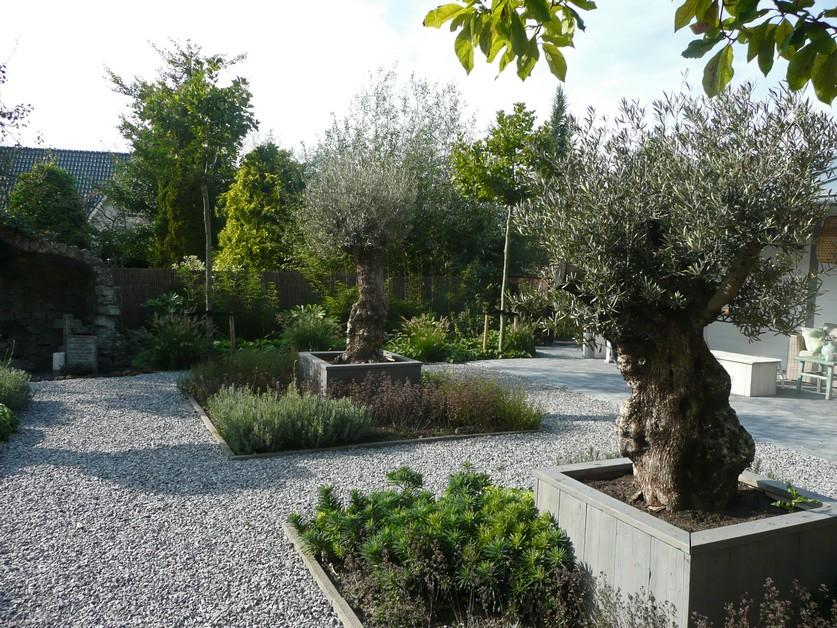 tuinontwerp-met-olijfbomen