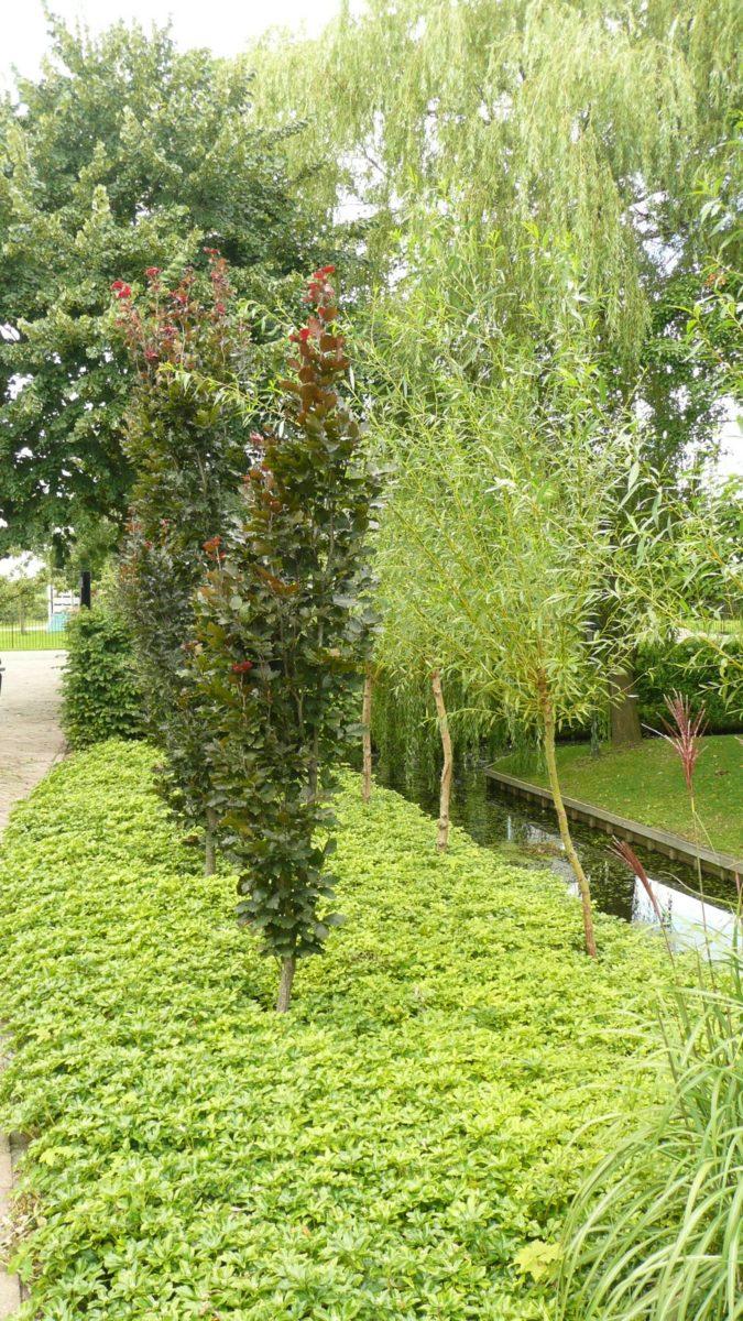 Beplanting & Snoeivormen
