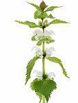 eetbare-plant